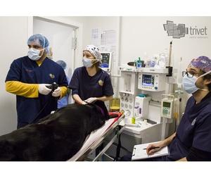 Endoscopia veterinaria en Cuenca