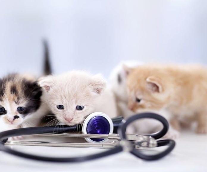 Consultas veterinarias: ¿Qué hacemos? de Centro Veterinario Chozas de la Sierra