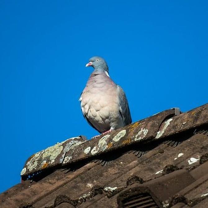 Consejos para mantener tu tejado en buen estado