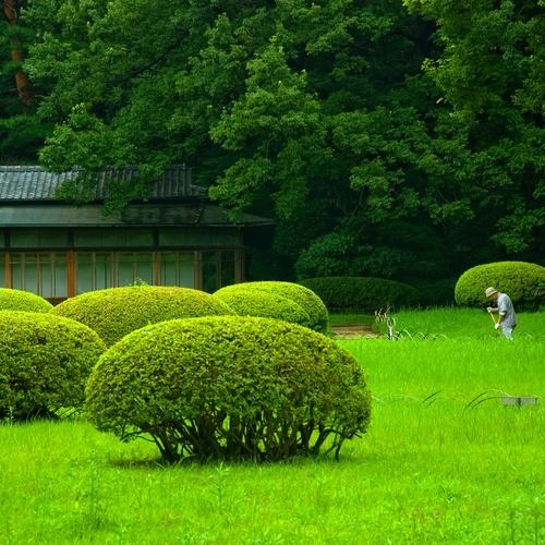 Mantenimiento de Jardines en San Román de los montes. Riegos de jardines en San Román de los montes