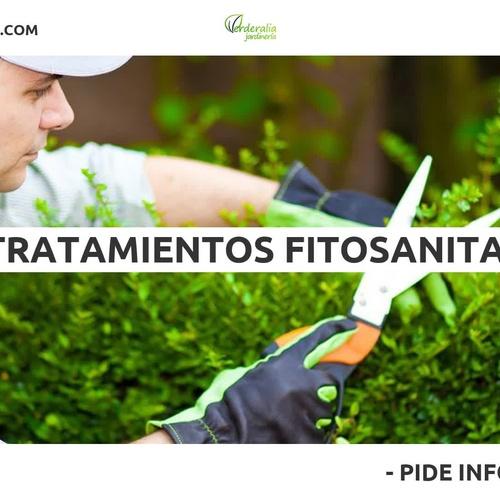 Diseño y mantenimiento de jardines en Paterna | Verderalia Jardinería