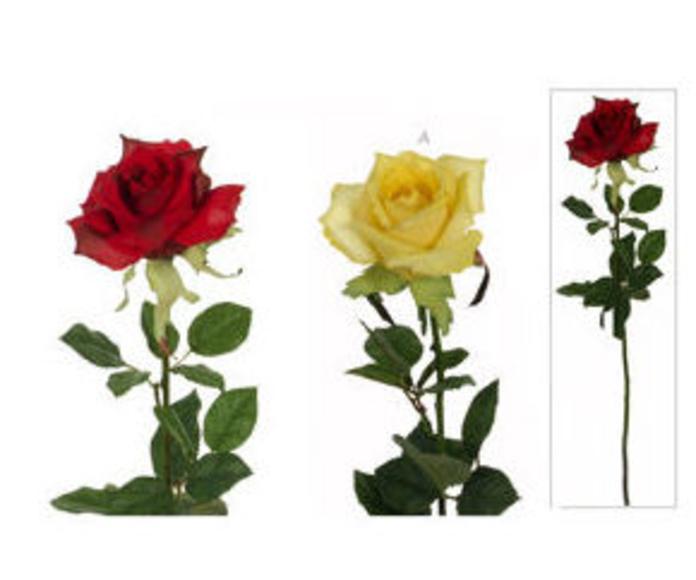 Rosa Ecuador Grande