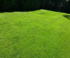 Mantenimiento de jardines para particulares
