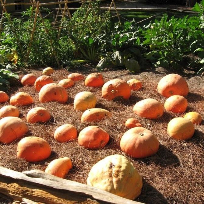 Consejos para incorporar un huerto en tu jardín