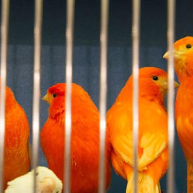 Consejos para la alimentación de aves