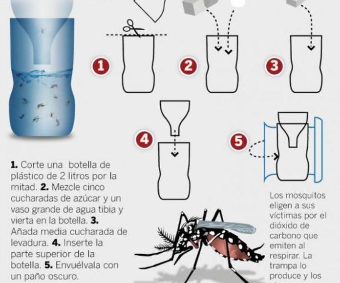 Trampa mosquito tigre