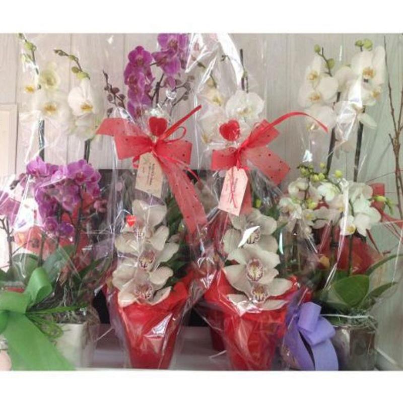 Orquídeas: Catálogo de Flores Maranta