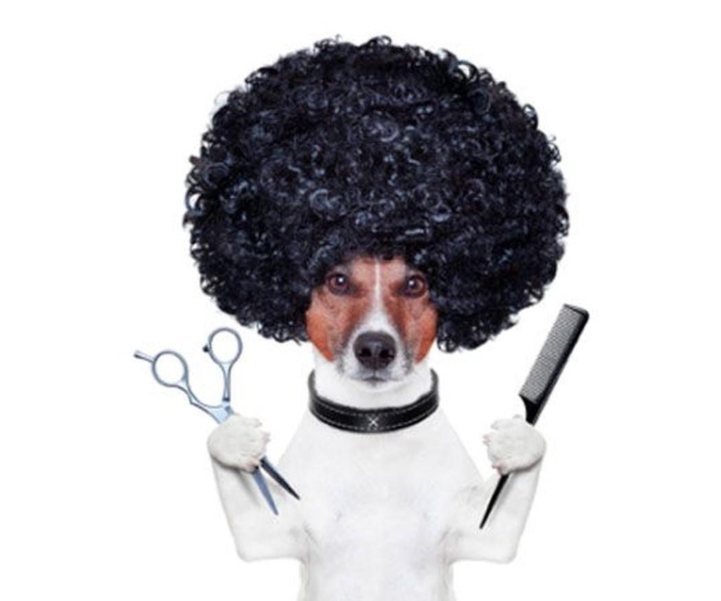 Cuándo cortar las uñas a tu perro