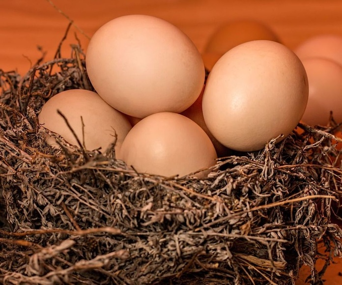 Huevos ecológicos para hostelería en Barcelona