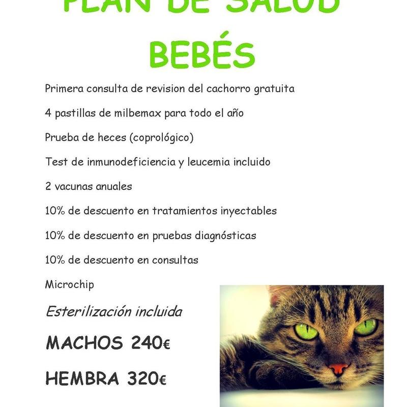 Plan de salud para gatos bebés