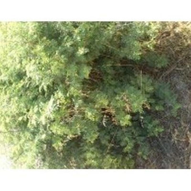 La Acacia: Productos de Danimayos Crea Tu Jardin
