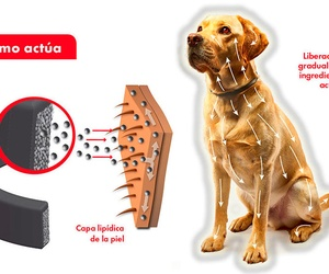 Vacunas animales en Manresa | Mascotes Castellbell