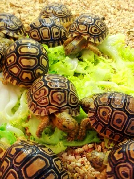 Amantes de tortugas...