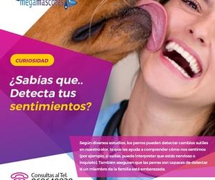 Los perros detectan nuestros sentimientos