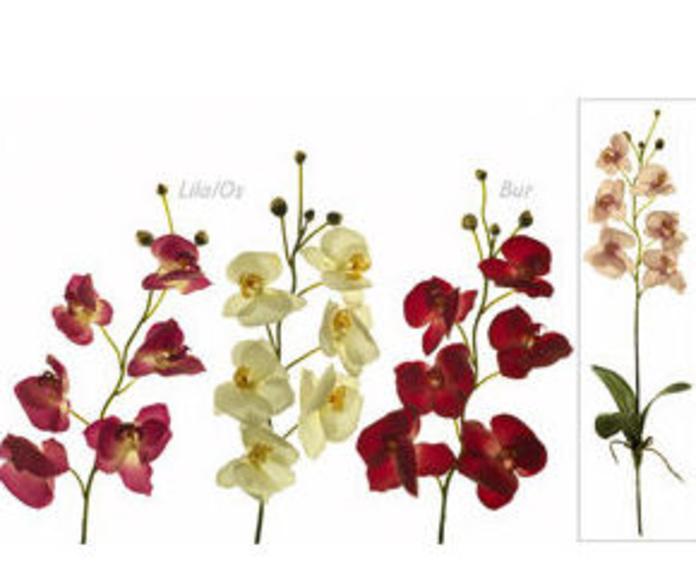 Orquídea x 6 con hojas-raíces látex