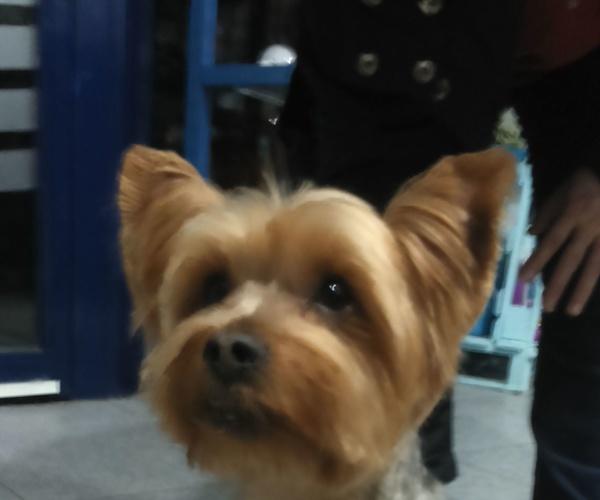 Peluquería canina en Santa Isabel/peluquería canina en Zaragoza
