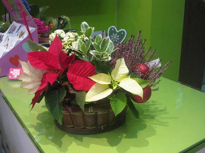 Centro navideño: Catálogo de flores y plantas de Floristería Pétalos