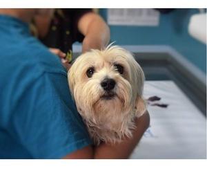Todos los productos y servicios de Clínica veterinaria en Zamora: Clínica Veterinaria Servet