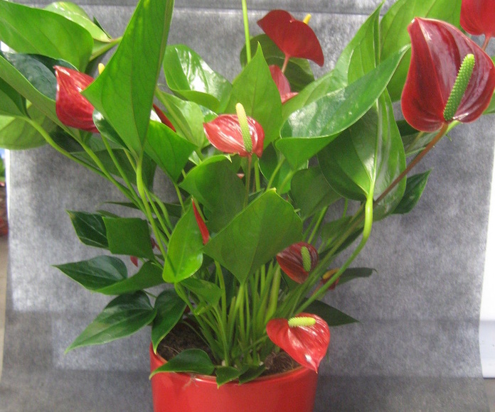 Flores a domicilio Oviedo