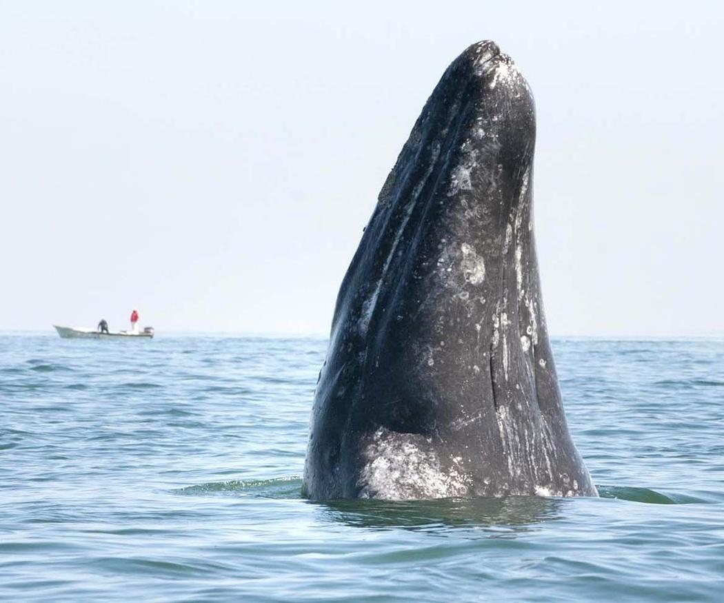 Los sonidos de las ballenas