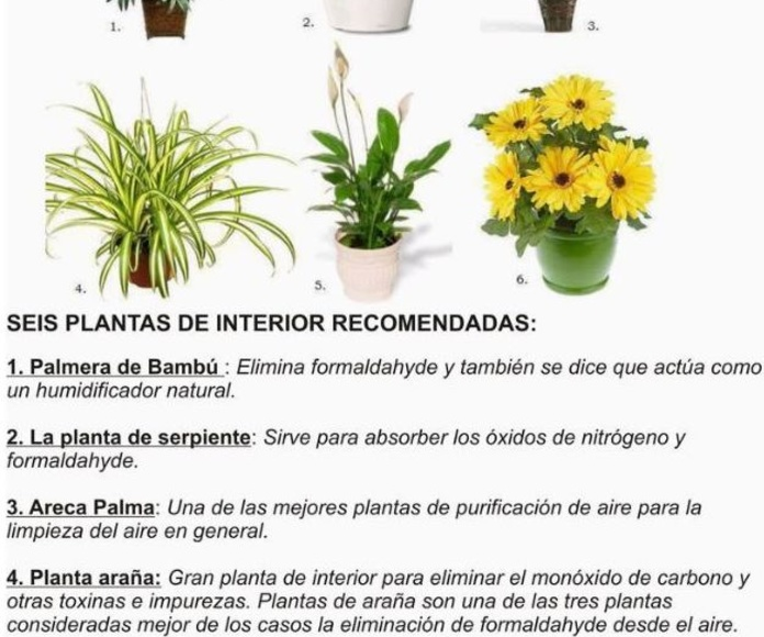 PLANTAS PURIFICADORAS PARA TU ESPACIO