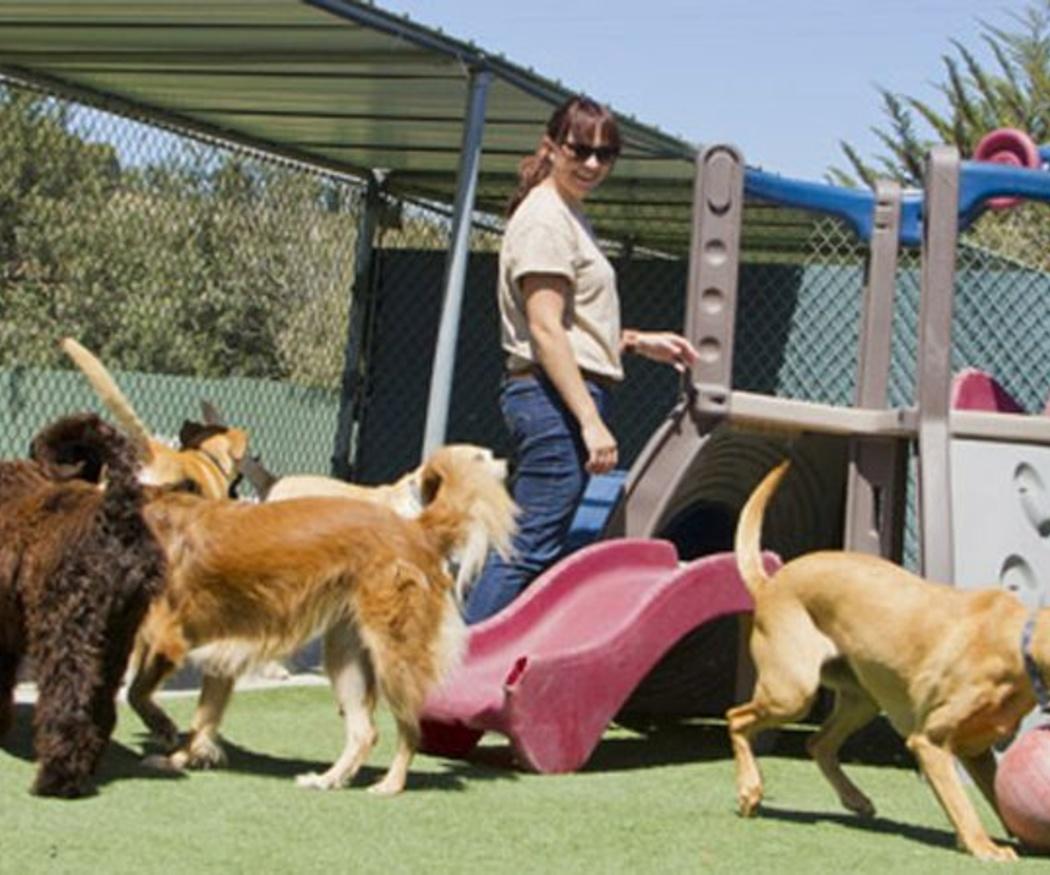 Grandes mitos sobre los perros grandes