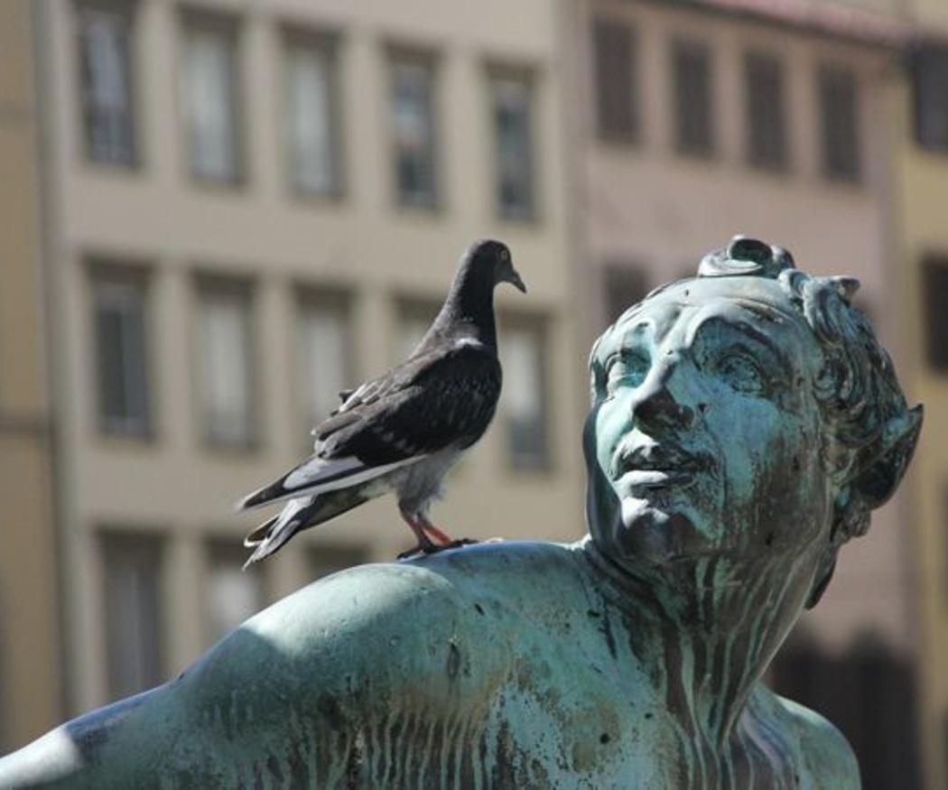 El control de palomas en las ciudades