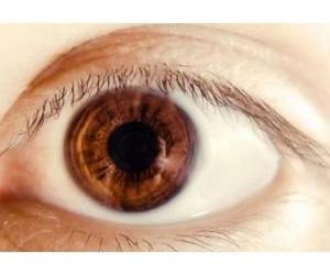 Todos los productos y servicios de Ópticas: Óptica Santamaría