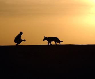 Veterinaria 24 horas: ¿Qué hacemos?  de Guardería Canina Estíbaliz