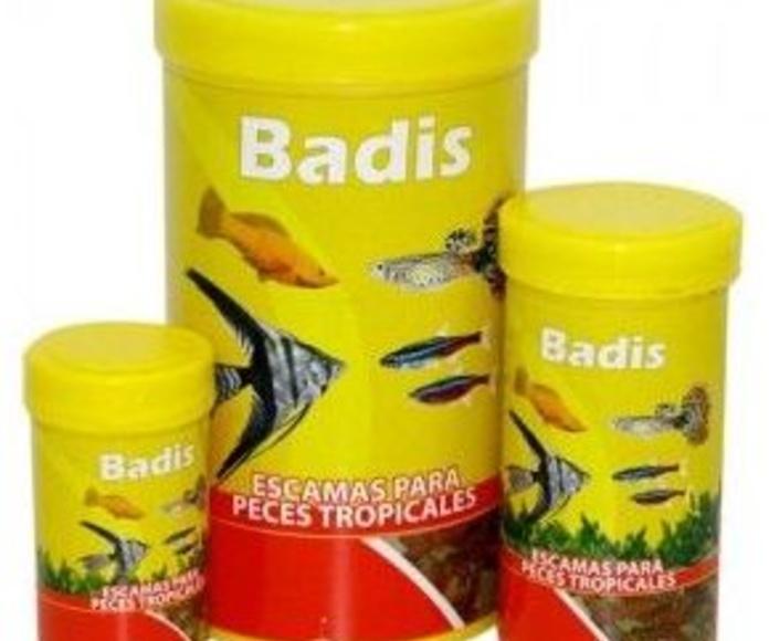 Reptiles y peces: Productos y servicios de Racadacan