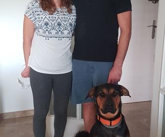 Hotel: Servicios de Hotel Canino y Felino El Rey de la Casa