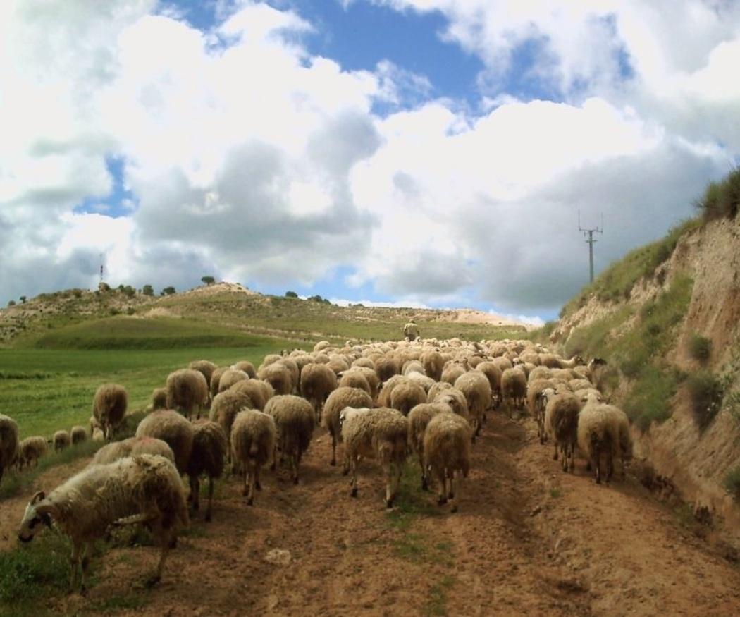La importancia del sector agrícola y ganadero en nuestro país