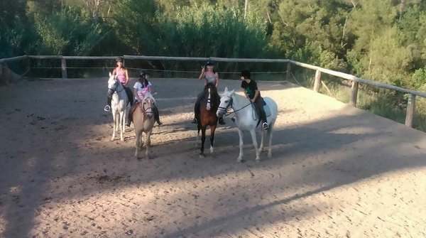 Clases de perfeccionamiento con caballos propios. Amor y pasión por los caballos!