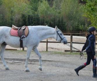Pupilaje de caballos: Servicios de Club Hípico de Cenes