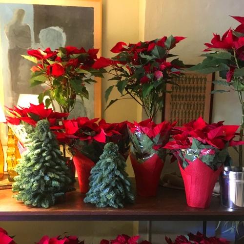 Christmas Time en Greenflor *