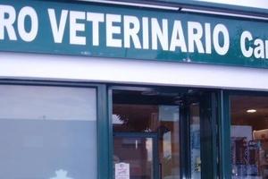 Todos los productos y servicios de Veterinarios: Clínica Veterinaria Campo de Níjar