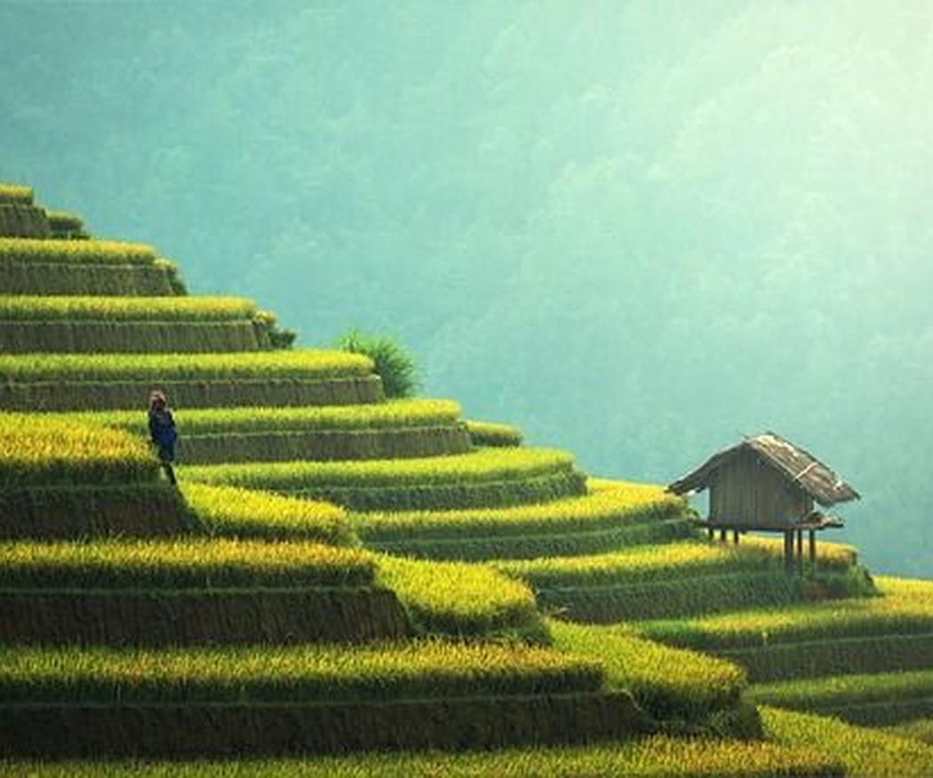 ¿Cuándo se empezó a cultivar el arroz?