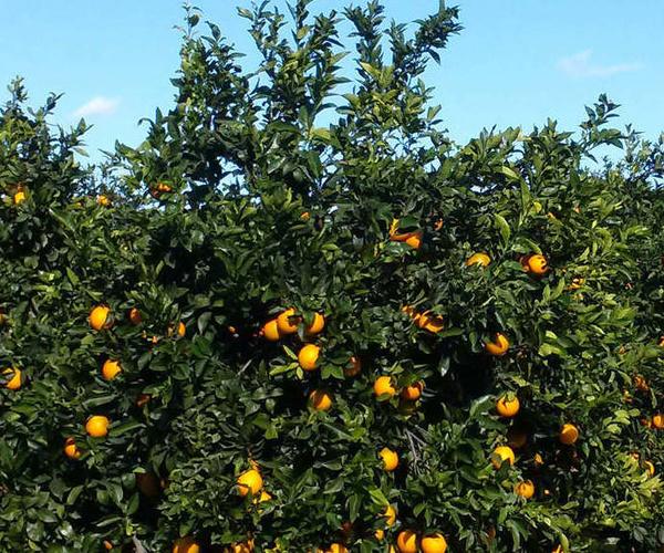 Naranjas a domicilio Madrid centro