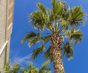 Cuidado de palmeras