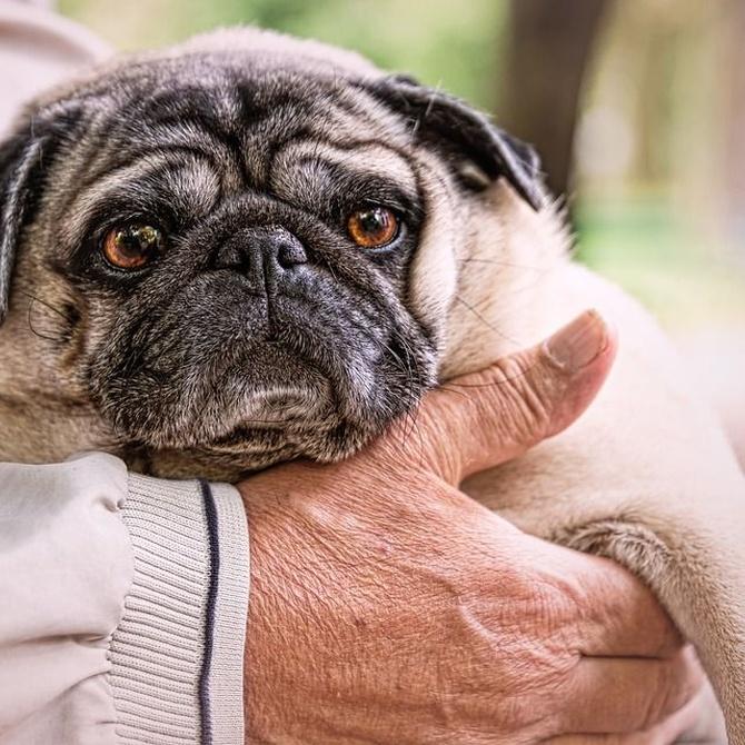 ¿Qué cuidados necesita un perro anciano?
