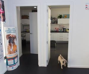 Asesoramiento nutricional para tus mascotas en Rivas
