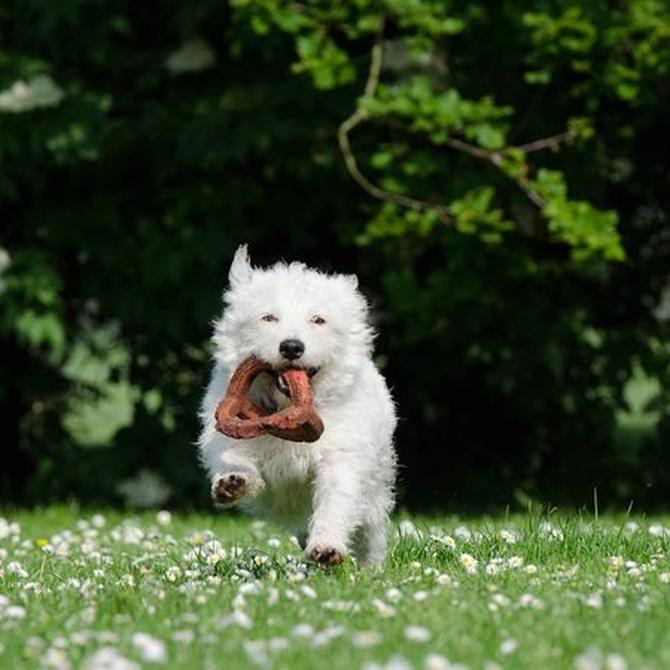 Ventajas de los juguetes interactivos para perros