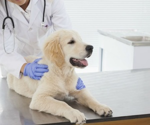 ¿Qué hacer si el perro sufre un golpe de calor?