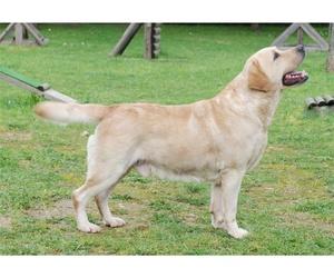 Baños para perros de cabello largo