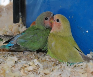 Tienda de pájaros en Cartagena