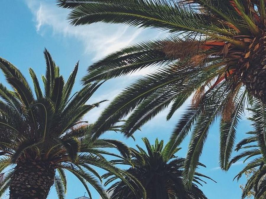 Consejos para tener tus palmeras en perfecto estado