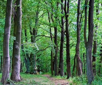 La madera, el mejor aliado del medio ambiente.