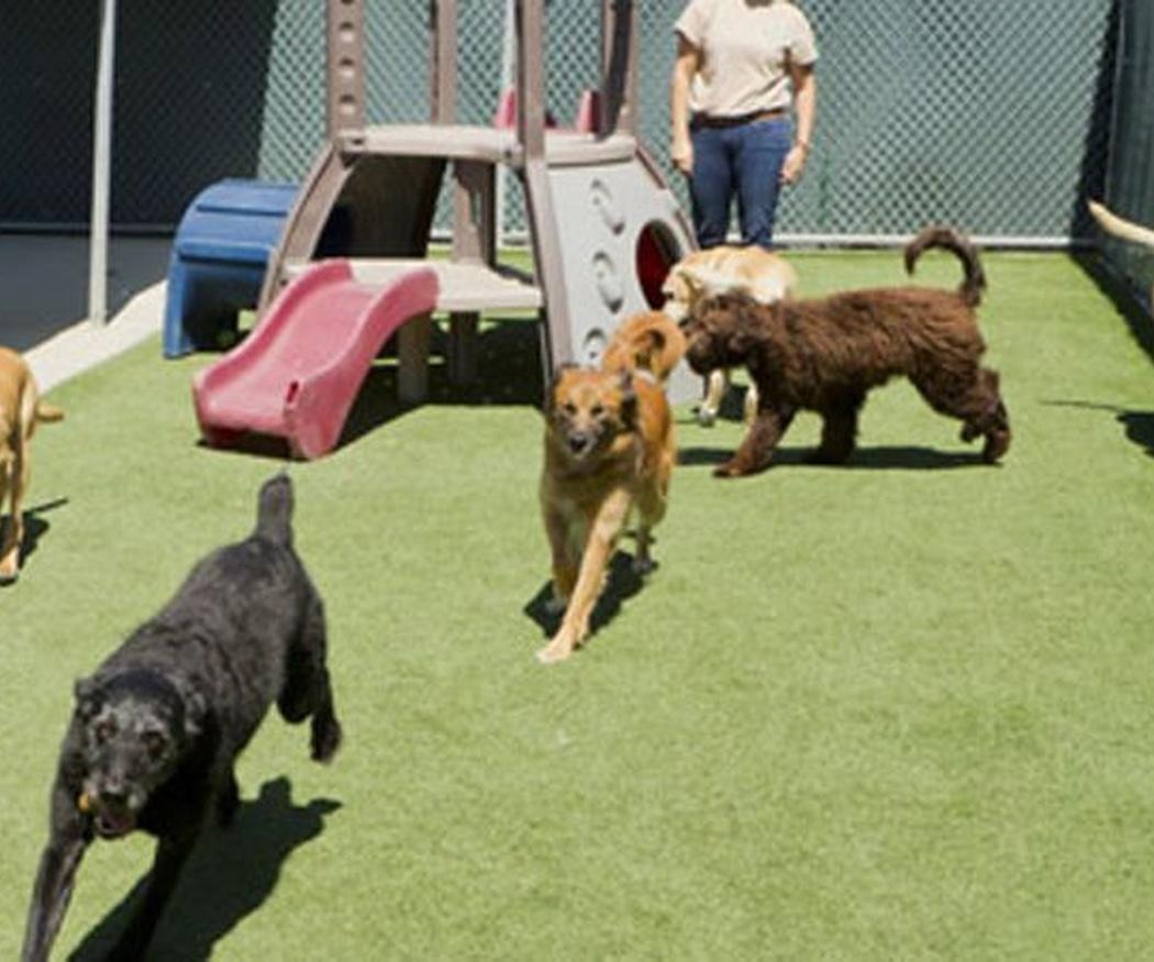 Enfermedades típicas en los perros