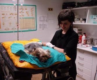 Hematología y analítica: Tratamientos de Clínica Veterinaria Belén Carasa