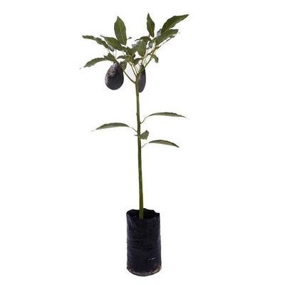 Todos los productos y servicios de Centro de Jardinería: Garden La Palma